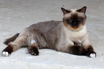 cat-1538633_1920